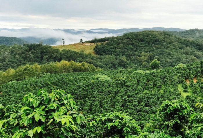 Yunnan Coffee Farm